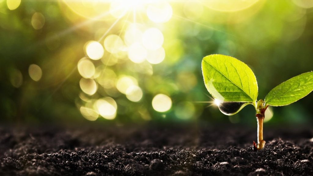 Beneficial Microbes and Sustainable Farming