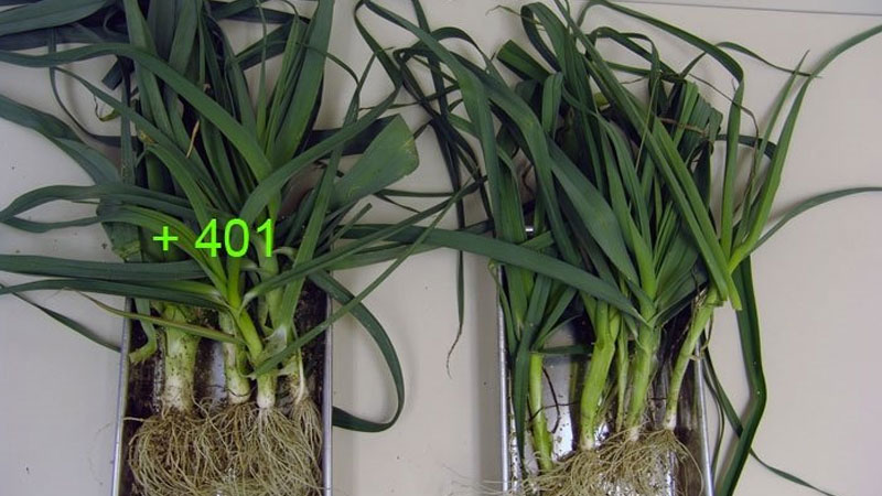 biodyne-401